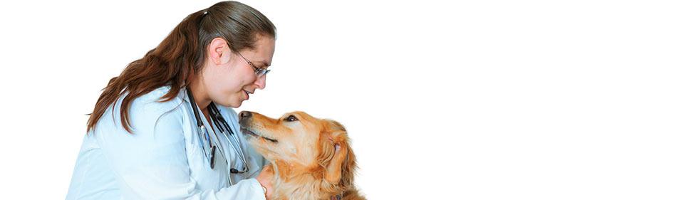 St  John's Veterinary Hospital - Over 30 Years of Quality