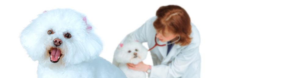 Locations St John S Veterinary Hospital Over 30 Years